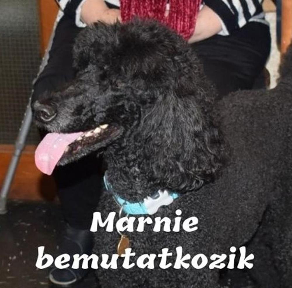 Marnie bemutatkozik