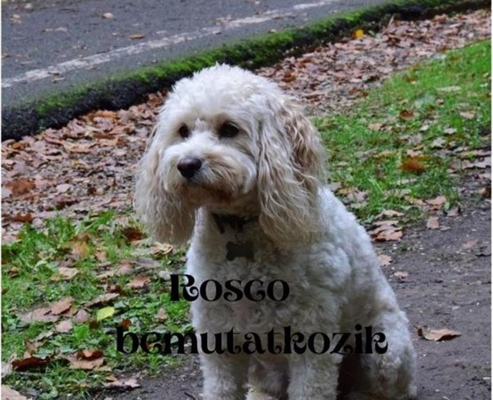 Rosco bemutatkozik